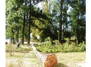 Nezničte cizí majetek kácením stromů!
