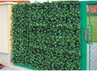 Zelený plot rychle a za rozumnou cenu!