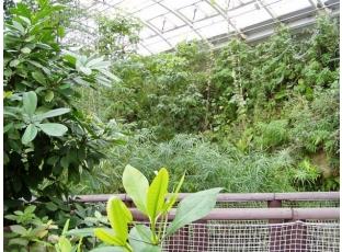 Rostliny pro vzdušné zahrady