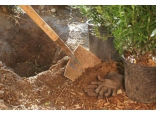 Logo Připravte se navýsadbu dřevin