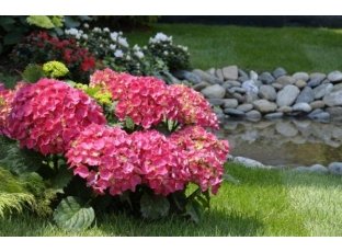 Logo Málokdo odolá kouzlu japoských zahrad