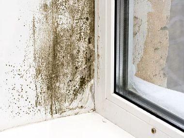 Jak zbavit domácnost plísní?