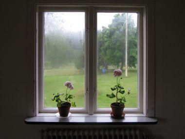 Rosi se okna