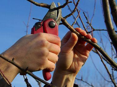 Jak ošetřit zahradní nářadí vzimě