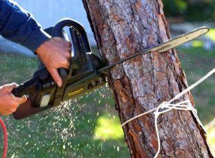 Logo Kdy můžete kácet stromy