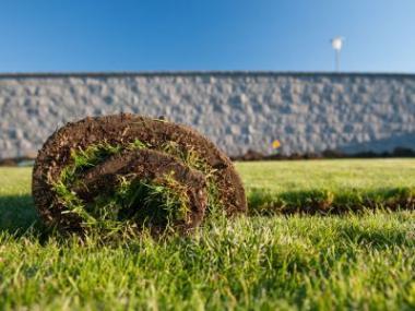 Logo Je lepší travní koberec nebo setý trávník?