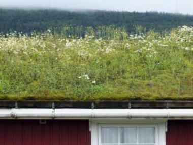 Zelená střecha není zbytečně drahý luxus