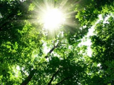 Logo O veřejnou zeleň pečujeme pocelý rok