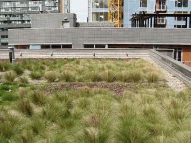 Růžová budoucnost zelených střech díky novému materiálu