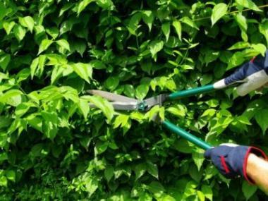 Logo Podle čeho vybrat zahradní nůžky