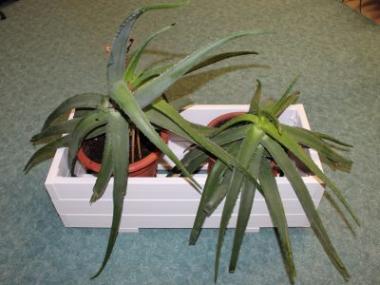 Plastové doplňky na vaší zahradě - pískoviště a truhlíky