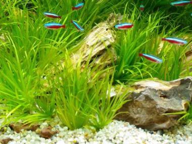 Jak zasadit rostliny do akvária