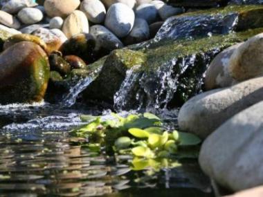 Jak se zbavit zelené vody v okrasném jezírku