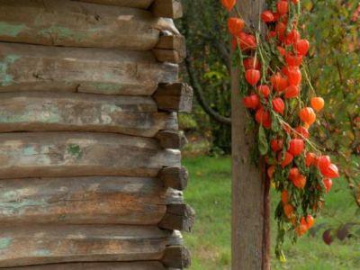 Logo Jak správně sušit rostliny pro aranže avěnce?