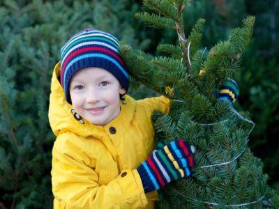Logo Umíte si vybrat vánoční stromek?