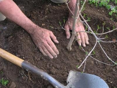 Březen je dobou výsadby ovocných stromků
