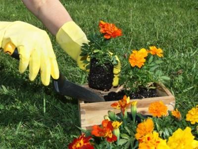 Nezapomeňte v březnu na květiny v zahradě