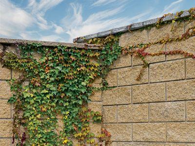 Jak oddělit a zkrášlit zahradu