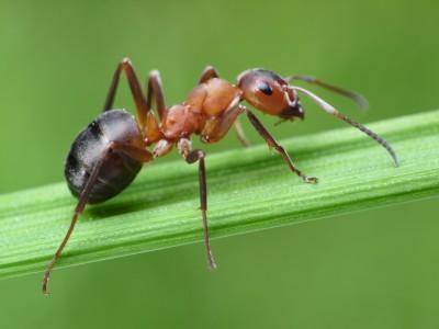 Trápí vás na zahradě mravenci?