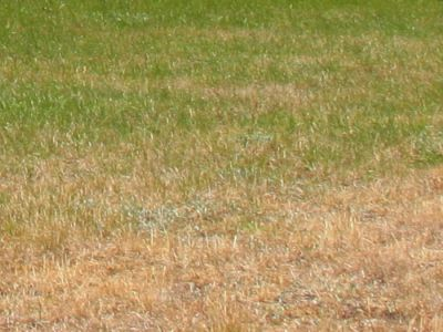 5 rad, jak nenechat trávník vypálit sluncem