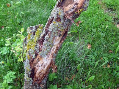 Logo Jak ošetřit poškozené kmeny avětve stromů