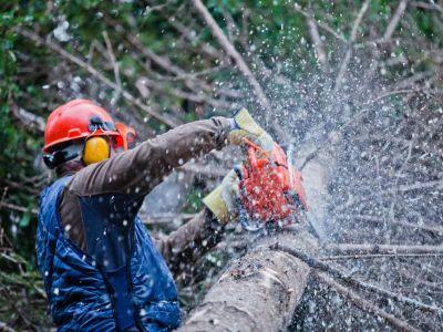 Logo Jak se chránit při těžbě ařezání dřeva?