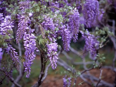 Znáte slepecké a jiné speciální zahrady?