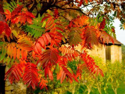 Co s opadaným listím a jehličím
