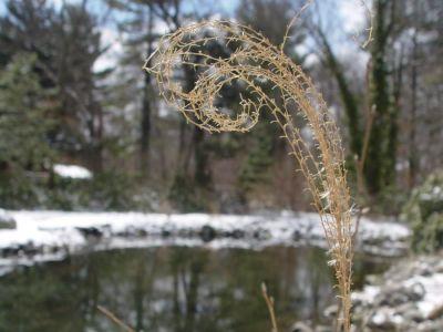Jak připravit vodní rostliny a ryby na zimu