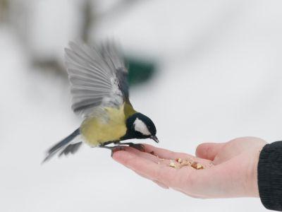 Logo Jak se vzimě postarat optáky žijící vedle nás?