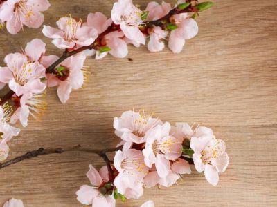 Barborka - jak si na Vánoce připomenout jaro