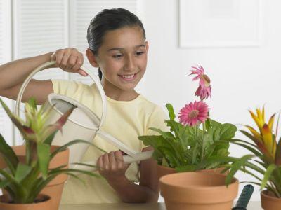 Logo Pokojové rostliny dětem