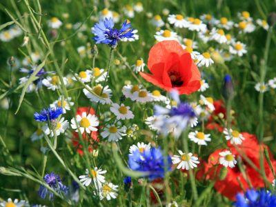Kousek květinové louky v zahradě