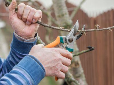Zimní péče o ovocné stromy