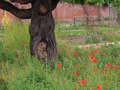 Co jsou doupné stromy a proč jsou v zahradách důležité?