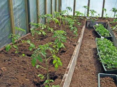 Jak na jaře pohnojit skleník