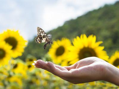 Logo Udělejte si motýlí zahrádku