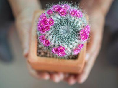 Logo 6rad jak pěstovat kaktusy, abyvykvetly