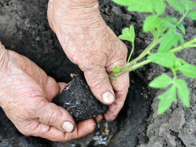 Jak se zbavit plísní na okurkách a jiné zelenině?