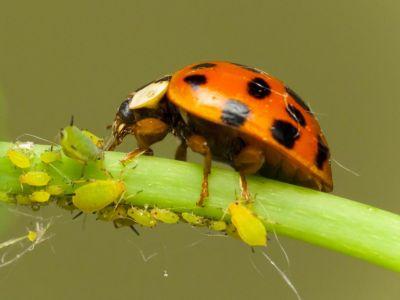 Jak se ve skleníku zbavit škůdců bez chemie