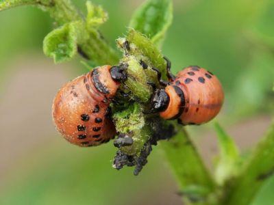 Jak chránit zahradu před škůdci ekologicky