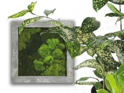 Obrazy mohou být i zelené