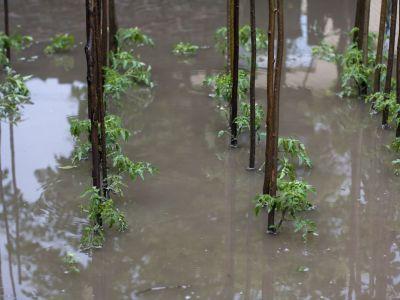 Co se zahradou po přívalovém dešti a nebo povodni?