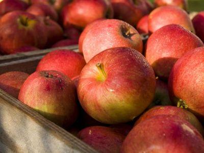 7 zásad správného skladování úrody