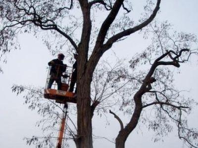 Logo Kdy, jak ajaké stromy lze kácet?