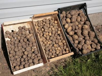 Jak uskladnit zeleninu a brambory