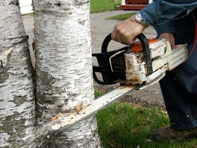 Potřebujete na kácení stromů povolení?