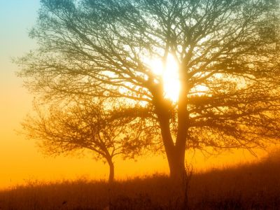 Oslavte s celým světem Den stromů