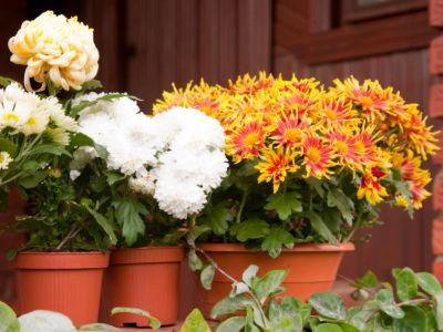 Jak oživit podzimní a zimní truhlíky