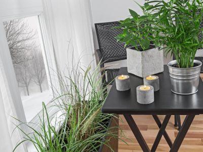 Jak na podzim pečovat o pokojové rostliny?